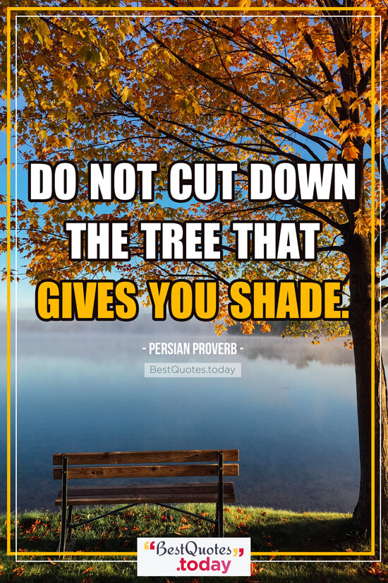 Best Quotes Today Do Not Cut Down The Tree That Gives You Shade
