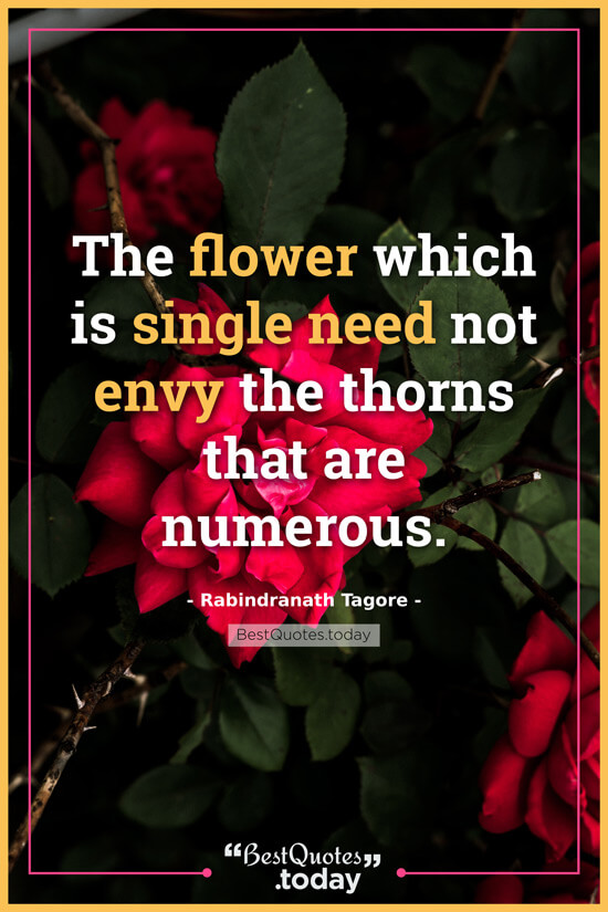 best quotes today the flower which is single need not envy the